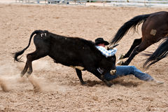 Steer wrestling. APACHE JUNCTION, AZ - FEBRUARY 26: A cowboy participates in the steer wrestling competition at the Lost Dutchman Days Rodeo on February 26, 2010 royalty free stock images