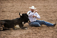 Steer wrestling. APACHE JUNCTION, AZ - FEBRUARY 27: A cowboy participates in the steer wrestling competition at the Lost Dutchman Days Rodeo on February 27, 2010 royalty free stock photography
