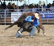 Steer Wrestling Royalty Free Stock Image