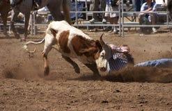 Steer Wrestling Stock Photo