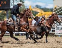Steer Wrestling Cowboy Stock Images
