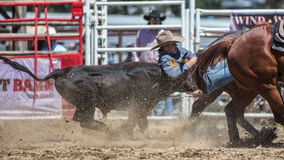 Steer Wrestling Cowboy Royalty Free Stock Photography