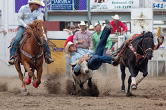 Steer Wrestling - PRCA Sisters, Oregon Rodeo 2011 Stock Image