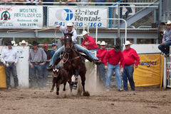 Steer Wrestling - PRCA Sisters, Oregon Rodeo 2011 Royalty Free Stock Images