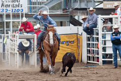Steer Wrestling - PRCA Sisters, Oregon Rodeo 2011 Royalty Free Stock Photography