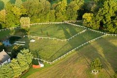 Steers in Pasture Aerial Stock Image