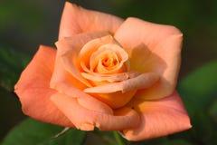 Steg: Royaltyfria Bilder