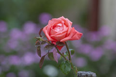 Steg Royaltyfria Bilder
