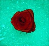 Steg att sväva för blomma Royaltyfri Bild