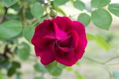 Steg blom Royaltyfri Foto