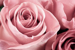 Steg blommanärbilden royaltyfri bild
