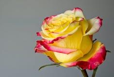 Steg blomman Royaltyfri Fotografi