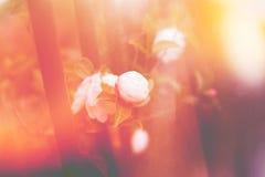 Steg blomman i klassisk ljus läckatappning för morgon Royaltyfria Foton
