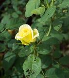 Steg blomman i trädgårdar och röd röd blomma Royaltyfri Bild
