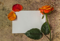 Steg blomman, kronblad, och vitt töm papper på en träbakgrund Royaltyfri Fotografi
