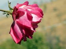 Steg blomman med grön bakgrund Fotografering för Bildbyråer