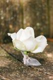 Steg blomman på lantlig wood bakgrund Fotografering för Bildbyråer