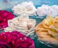 Steg blommor i vatten som tonar Arkivfoto