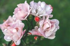 Steg blomningar Fotografering för Bildbyråer