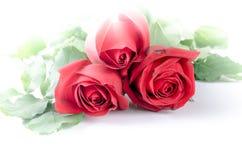 Steg den lyckliga valentin för blommaflora på vit bakgrund Royaltyfri Bild