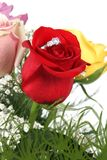 steg den röda cirkeln för petals Royaltyfri Bild