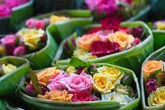 Steg den stilfulla blandningen för blandningen av blommahorisontaldesignramen Den gröna vanliga hortensian som var lös steg, kame Arkivbilder