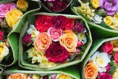 Steg den stilfulla blandningen för blandningen av blommahorisontaldesignramen Den gröna vanliga hortensian som var lös steg, kame Arkivfoton