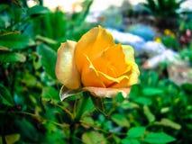 steg enkel yellow Fotografering för Bildbyråer