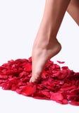 steg foten petals Arkivbild