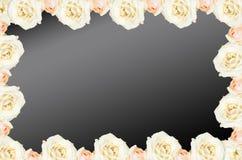 Steg Horisontalram Kräm- rosor i en grupp på en bleckbakgrund Bakgrundsabstrakt begrepp som göras av rosor Fotografering för Bildbyråer