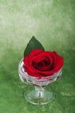 Steg i en vas på en artsy bakgrund med copyspace Royaltyfria Foton