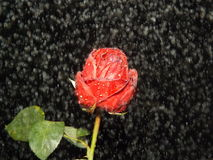 Steg i regn royaltyfri fotografi