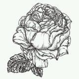 Steg illustrationen för blommagravyrvektorn Arkivfoto