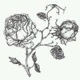 Steg illustrationen för blommagravyrvektorn Fotografering för Bildbyråer