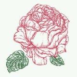 Steg illustrationen för blommagravyrvektorn Royaltyfri Bild