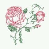Steg illustrationen för blommagravyrvektorn Arkivbilder