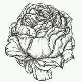Steg illustrationen för blommagravyrvektorn Royaltyfri Fotografi