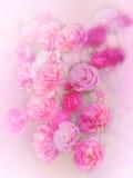 Steg mjuk rosa färgsuddighet Royaltyfri Fotografi