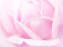 Steg mjuk rosa färgsuddighet Arkivbild