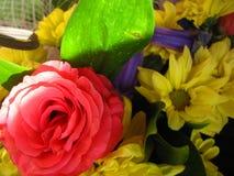 Steg och gulingkrysantemumet Royaltyfria Foton