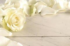 Steg och kronblad över träbakgrund Fotografering för Bildbyråer