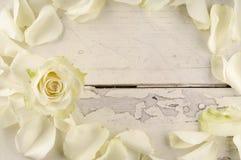 Steg och kronblad över träbakgrund Royaltyfria Bilder
