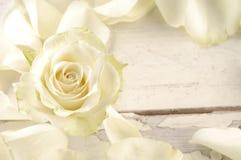 Steg och kronblad över träbakgrund Royaltyfri Bild
