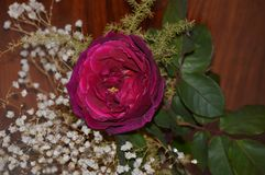Steg och vita dekorativa blommor Arkivbilder