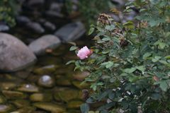steg på en buske vatten och stenar i arkivbild