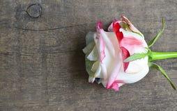 Steg på gammal träbakgrund för dag för valentin` s med kopieringsutrymme Valentine Rose Arkivfoto