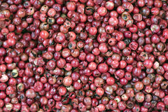 Steg peppar, kryddan som uppskattades i Frankrike, och Brasilien Arkivfoton