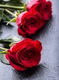 Steg röda ro Bukett av röda ro Flera rosor på granitbakgrund Valentindag, bakgrund för bröllopdag Royaltyfri Bild