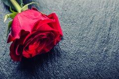 Steg röda ro Bukett av röda ro Flera rosor på granitbakgrund Valentindag, bakgrund för bröllopdag Royaltyfria Bilder