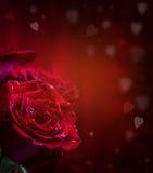 Steg röda ro Bukett av röda ro Flera rosor på granitbakgrund Valentindag, bakgrund för bröllopdag Arkivbild